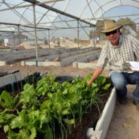 PEDI Urban Agriculture Academy launched