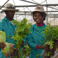 Pedi Agriculture Academy – One year on