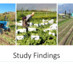 study-findings