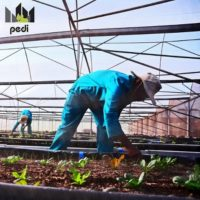 Pedi signs agreement with city to train urban farmers